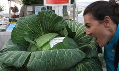 Riesen-Cabbage: Wobei, mit 18 Pfund ist er noch erträglich klein. Foto: Doris Cabbage, Pictures, Cabbages, Collard Greens, Sprouts, Kale