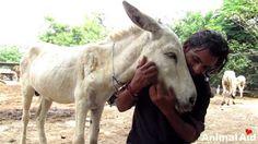 """""""O Grito do Bicho"""": Mais um resgate emocionante da Animal Aid na Índia..."""