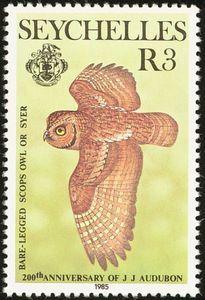Seychelles Scops Owl(Otus insularis)