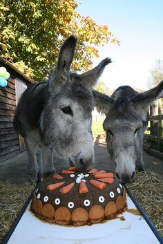 Beautiful birthday cake | por The Donkey Sanctuary