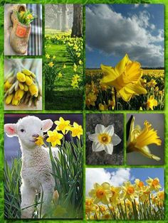 Spring and daffodils