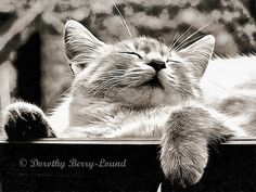 Three kittens go off on an adventure and get lost after being attacked by hunting dogs. A short story about three lost kittens and how they got home. A short story by Dorothy Berry-Lound, illustrated with her art work. All images in the story are availabl