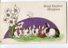 Easter Postcard -Vintage EASTER Bunny Rabbits and chick Postcard STECHER  Embossed  - Vintage Stecher PostCard by sharonfostervintage on Etsy