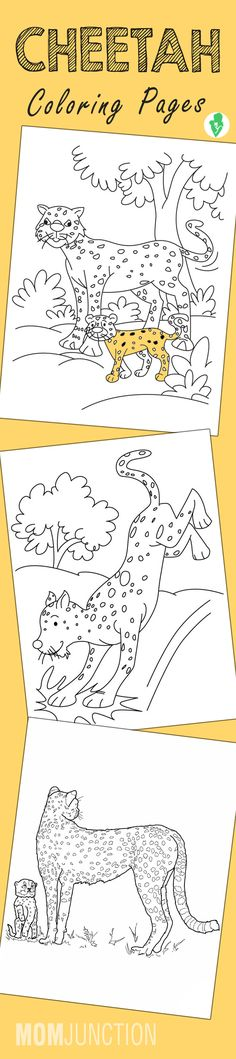 10 Best Cheetah Coloring Pages For Your Little Ones
