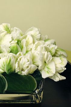 LOVE white tulips.  They are pretty cute with hosta leaves in square vase.
