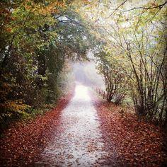 #autumn #road near #belluno