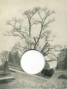 david gates - tree collage
