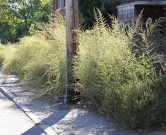 The Flora of the Future: Wild Urban Plants: Places: Design Observer