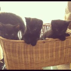 Stair Basket Kittens
