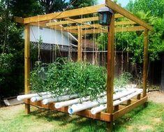 The Basics of Hydroponic Gardening | Prepper Universe