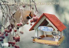 #Karmniki dla ptaków zimujących