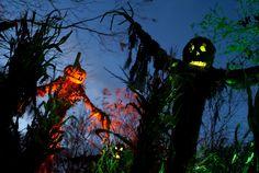 Scarecrows - good use of lighting #halloween