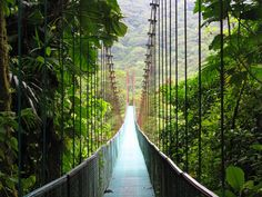 Costa Rica,Central America,Rainforest,Jungle but these bridges freak me out. ✅