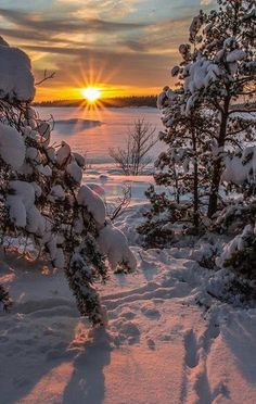 Good morning ☕️☀️🌍 Photo by 👆📷👉 👏👏👏 Perfect photo 👍 Perfect gallery 👏👏👏 . Winter Pictures, Nature Pictures, Winter Photography, Nature Photography, Winter Drawings, Winter Scenery, Winter Love, Winter Magic, Snow Scenes