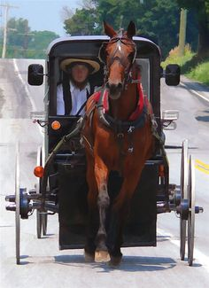 Amish man and his buggy. They take great care and pride in their buggies.