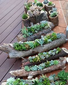 succulent gardens in hollowed out logs and also in timber rounds available from the