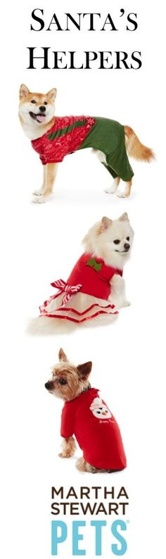 Is your pet ready for the holidays? Take a look at our #MarthaStewartPets #holiday apparel.
