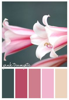 Gold On The Ceiling: Pink Trumpets