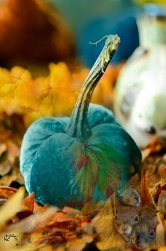 Fall Softly In Turquoise - Who said pumpkins have to be orange! Orange And Turquoise, Aqua, Yellow, Teal Pumpkin, Pumpkin Spice, Halloween, Velvet Pumpkins, White Pumpkins, Autumn Day