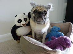 Oh the hats!!! Koala pug!