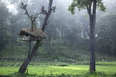 Muthanaga blanketed in the true green beauty of the nature