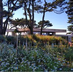 Peter Zumthor, Tropical, Landscape Architecture, Devon, Garden Landscaping, Indoor Outdoor, Places To Visit, Exterior, Island