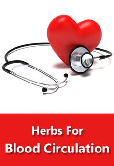 Learn about herbs that can improve blood circulation.