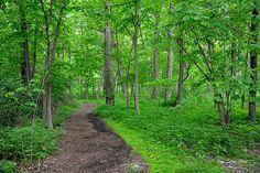 Arboretum-Picasa