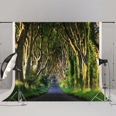 Find More Background Information about Kate 300x300cm Forest Photography Backdrops Tree Background Studio Photography Road Children Microfiber Photobooth Background ,High Quality Background from Marry wang on Aliexpress.com