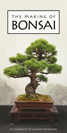 Blog Post: The Making of Bonsai #gardening