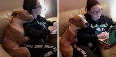 Μια φοιτήτρια υιοθετεί ένα σκύλο, γλυτώνοντάς τον από ευθανασία και αυτός δεν μπορεί να σταματήσει να την αγκαλιάζει! - DogWay.gr