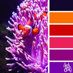 Take a dive under the sea with these beautiful color combinations inspired by ocean life and Living Coral - PANTONE's 2019 Color of the Year. Ocean Colors, Tropical Colors, Bold Colors, Rainbow Colors, Tropical Fish, Color Schemes Colour Palettes, Colour Pallette, Color Combos, Color Of Life