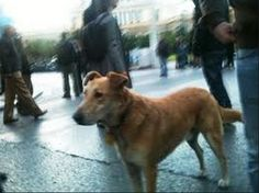 KANELLOS, the riot dog...!