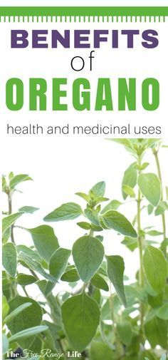 Oregano is more than just a culinary herb. It is a powerful medicinal plant with many health benefits. Do you know the all the uses and benefits of oregano?