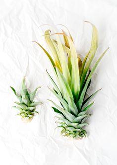 pineapple heads photo by Miyuki Mardon