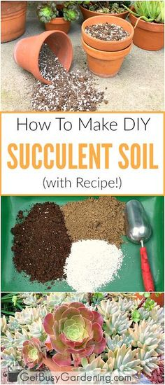 To Make Your Own Succulent Soil (With Recipe!) This succulent soil recipe is super easy to make (only 3 ingredients!), and costs way less than buying pre-made succulent potting mix at the store! It's the best soil for succulents!This succulent soil recipe Crassula Succulent, Succulent Gardening, Succulent Care, Planting Succulents, Container Gardening, Garden Plants, Planting Flowers, Organic Gardening, Succulent Plants