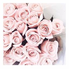 Bouquet Of Light Pink Roses My Flower, Pretty Flowers, Pretty In Pink, Light Pink Flowers, Light Pink Rose, Flower Ideas, Tout Rose, No Rain, Everything Pink