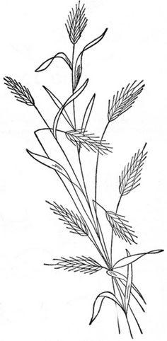 1888 Ingalls Wheat Stalk   Flickr - Photo Sharing!