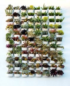 Succulent Living Wall at Pigment in San Diego, California. Visit www.shoppigment.com for everything you need to build your own.