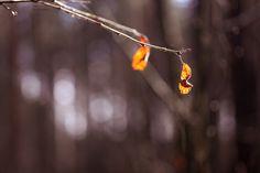 Winter survivors | by Siniirr Dandelion, Kitty, Spring, Winter, Flowers, Little Kitty, Winter Time, Dandelions, Kitty Cats