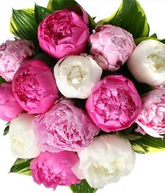 Peonies- I LOVE peonies!!! I would be so happy if I could grow and entire garden with peonies & lilacs...
