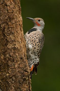 Frog Pond Photography: Attracting and photographing Woodpeckers