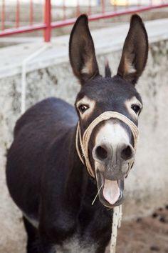Donkey                                                                                                                                                                                 Mehr