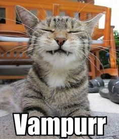 Funny pictures about Still a better vampire than Edward Cullen. Oh, and cool pics about Still a better vampire than Edward Cullen. Also, Still a better vampire than Edward Cullen. I Love Cats, Crazy Cats, Cool Cats, Funny Animal Pictures, Funny Animals, Cute Animals, Funniest Animals, Animal Fun, Animals Dog