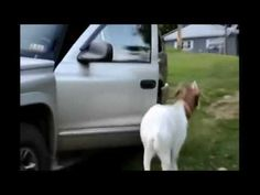video lucu binatang: funny animals taking baths funny interrupting
