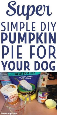 Super Simple DIY Pumpkin Pie For Your Dog's Thanksgiving (and maybe any other day, too)