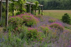 The Flower Garden in June: Gravetye Manor, UK Nepeta `Six hills Giant´ and geranium. Purple alliums and orange poppies planted in between the drifts of blue and pink. <3