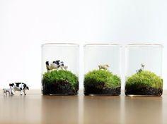 苔のミニミニテラリウム*動物のいる草原
