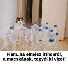 Vodka Bottle, Water Bottle, Funny Memes, Jokes, Internet, Funny Comics, Vape, Horror, Stupid