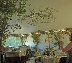 trees in marquee